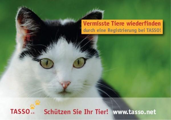 tasso_katze