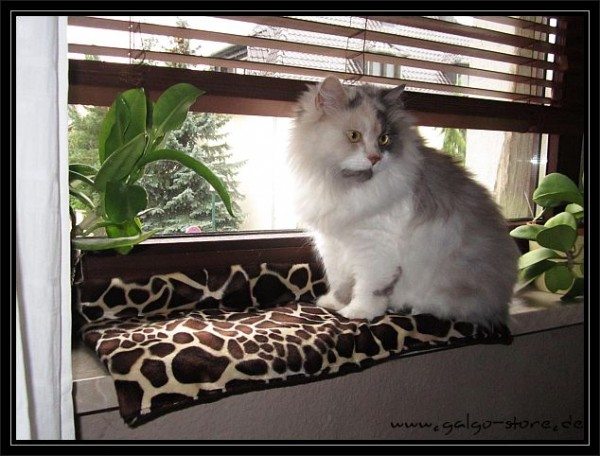 Katzenkissen Fensterbank
