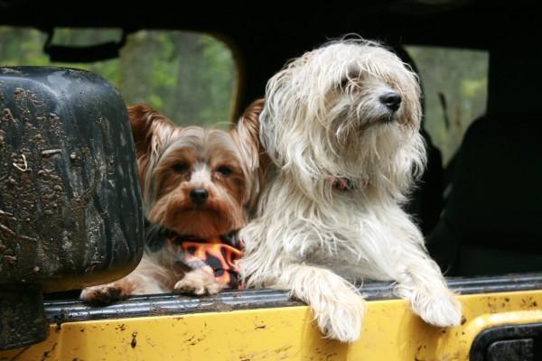hund_reise