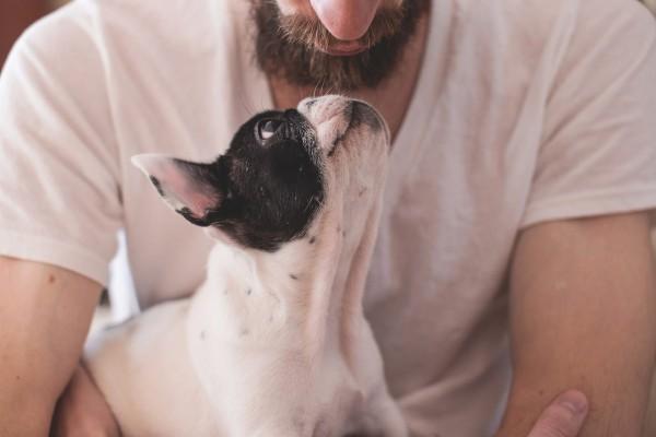 Hund_Mensch_frenchi