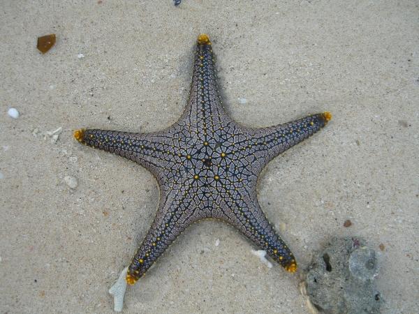 starfish_seestern1_kl