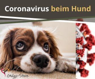 coronavirus_hund