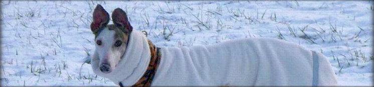 746x175_banner_winter