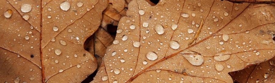 Regen2_KAT