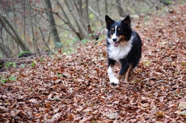 Hund_herbst