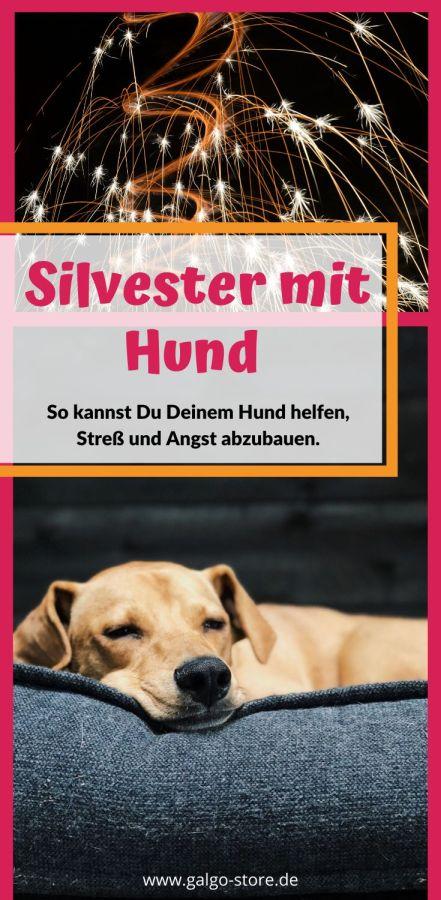 Hund_Silvester_1kl